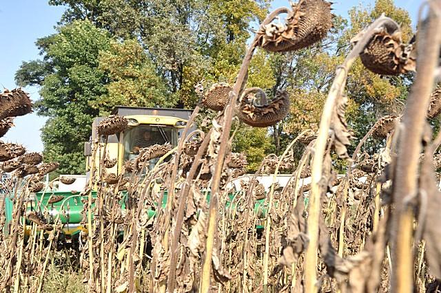 """Результат пошуку зображень за запитом """"збір зернових осінь"""""""